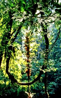 The Wilderness 298557avatarthewildeness