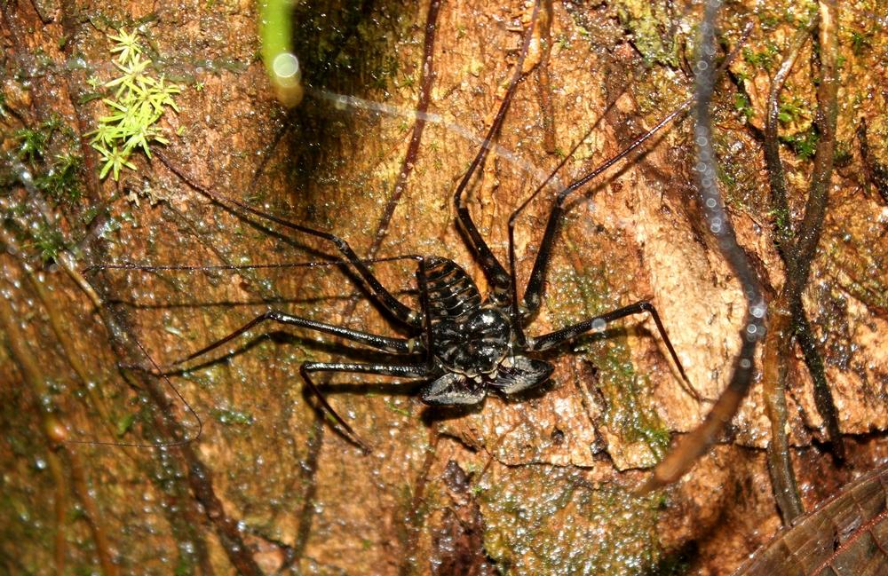 15 jours dans la jungle du Costa Rica - Page 2 299287amblir