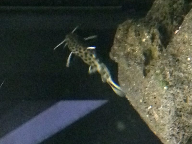 Identification d'un poisson 302349IMG1392