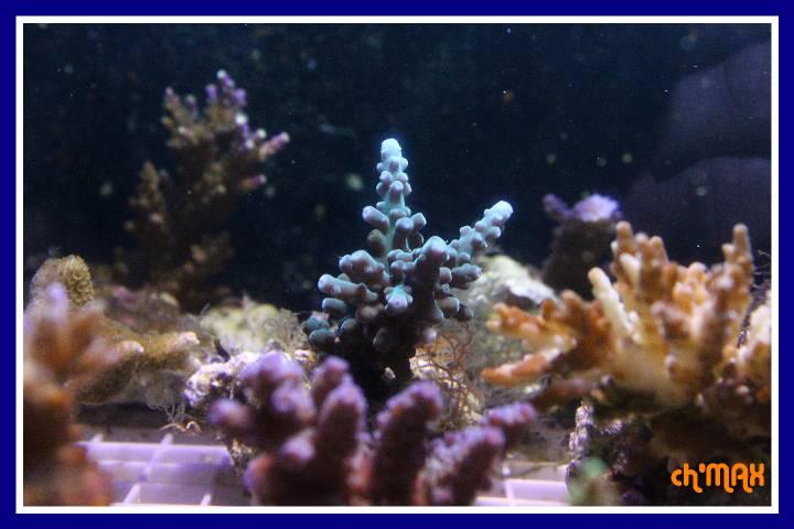 ce que j'amène en coraux a orchie  306667PXRIMG0037GF