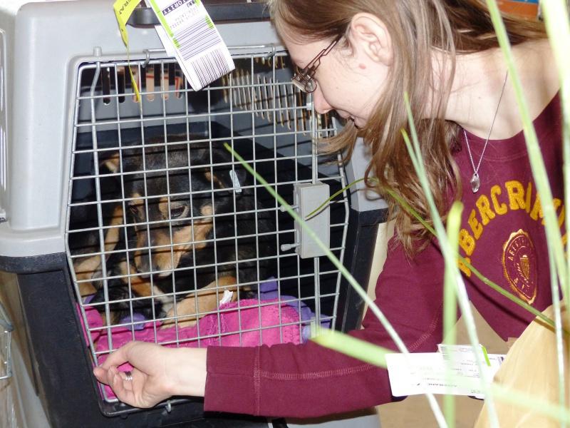 Negrutza, un amour de chienne, 2 ans environ - Page 2 308708P1030210
