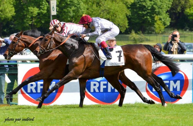 Prix Ganay 2014 (Gr. I, Longchamp) 27-04 : Cirrus des Aigles (+photos) 317402223001