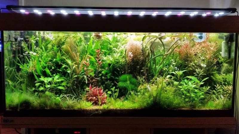 Mes (plus) de 60 plantes dans mon 240 litres - Page 6 31932220141221082434