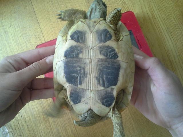 Mes nouvelles tortues 320831201404271611591