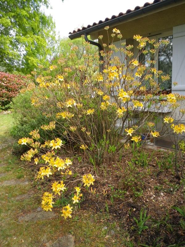 avril, jardin fébrile - Page 5 322790IMGP4328