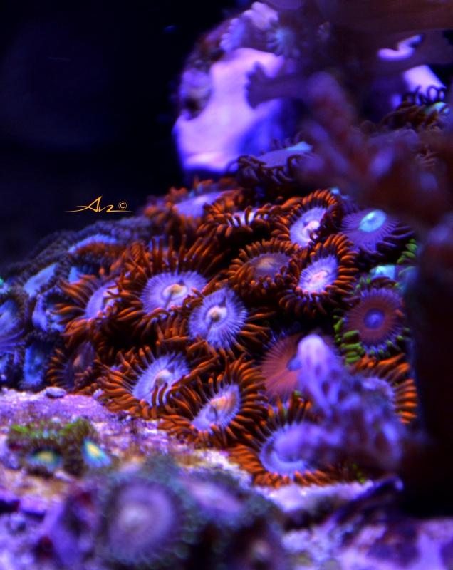 Mon premier aquarium eau de mer - Page 4 324773Zozofireandice