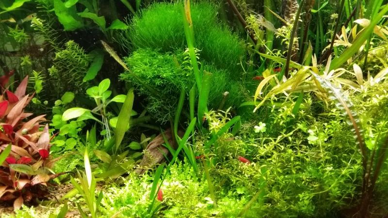 Mes (plus) de 60 plantes dans mon 240 litres - Page 6 32595920141221082447