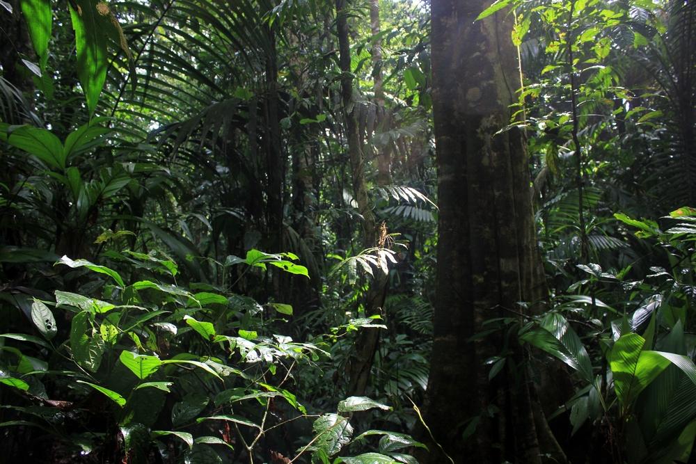 15 jours dans la jungle du Costa Rica - Page 2 326537selvar
