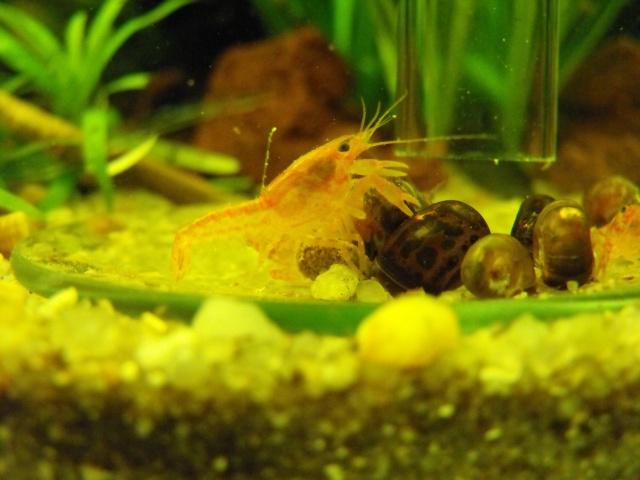 mes aquariums 327002DSCF6194