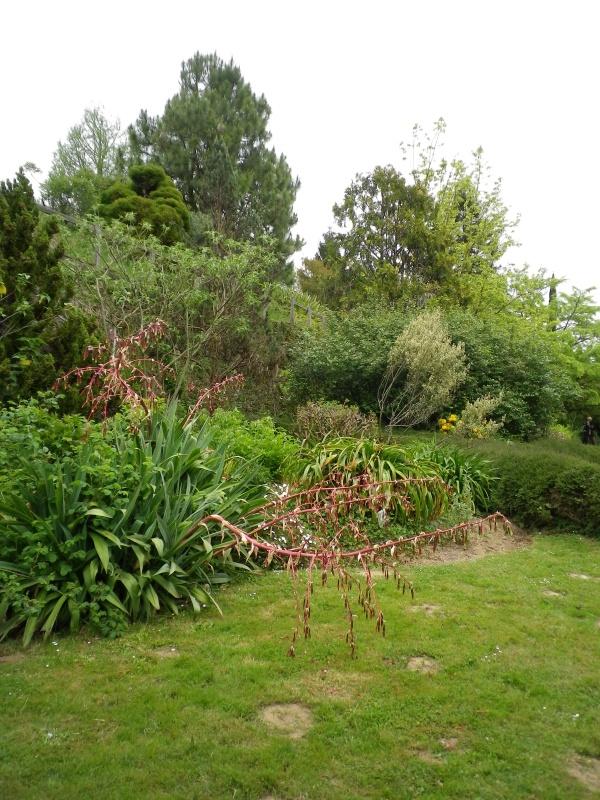 (40) Plantarium et chemin de ronde - Gaujacq - Page 2 340304IMGP4537