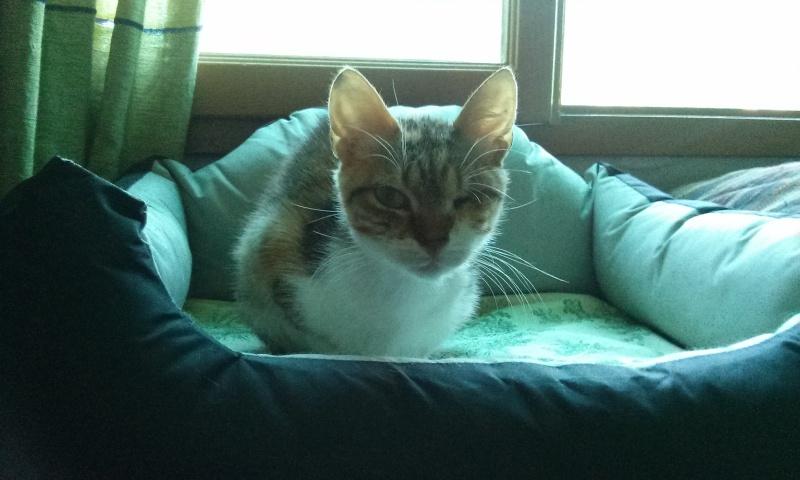 DUCHESSE - chatte femelle, née 2011/2012, borgne - (PASCANI) - adoptée par Chantal Pascal (dpt 63) - Page 3 3420913324