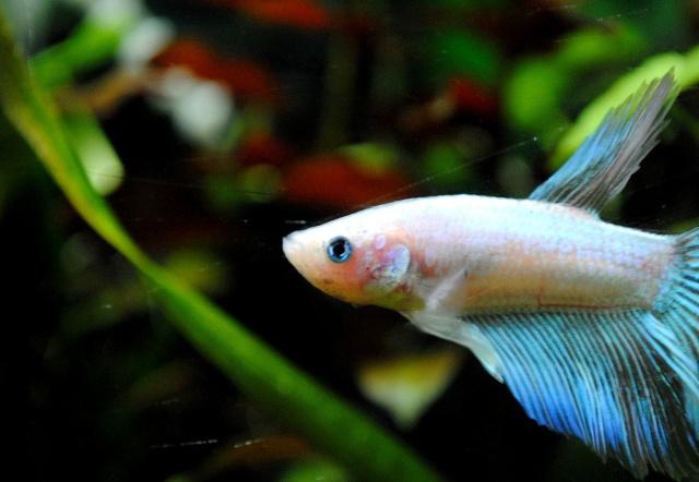 Tous mes poissons + crevettes 34398212j5