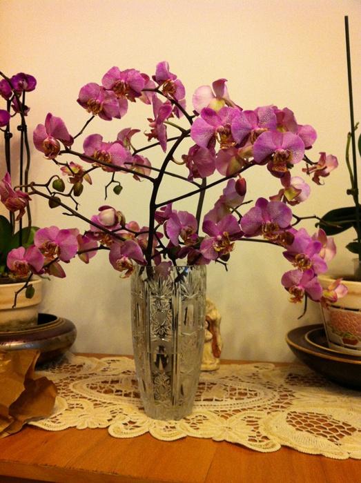 Reinflorire phalaenopsis forumul-florilor - Pagina 5 348175IMG2763