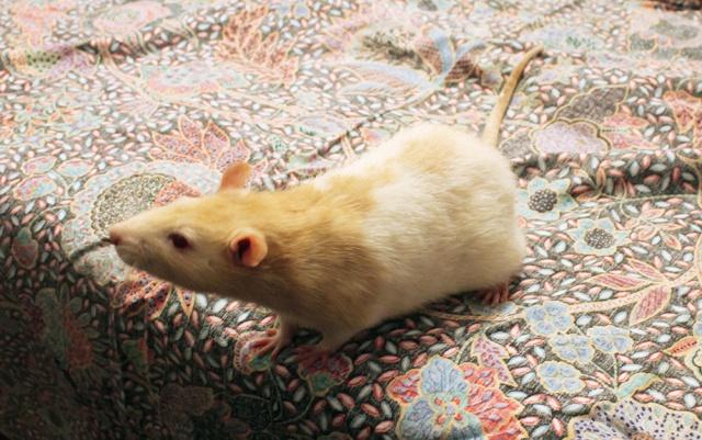 Radius cherche une belle ratoune ! 348508RadiusBD