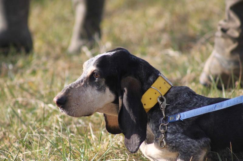 Brevet de chasse sur lièvre Marnay (71) 7 et 8 mars 2015 348708IMG6523
