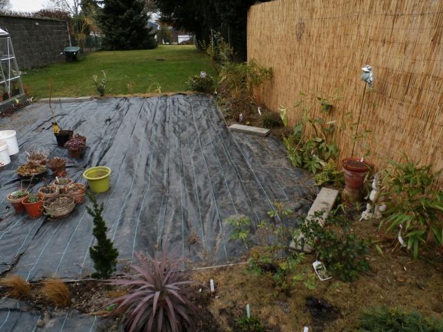 Phyllo - nouveau jardin 358770P3160015