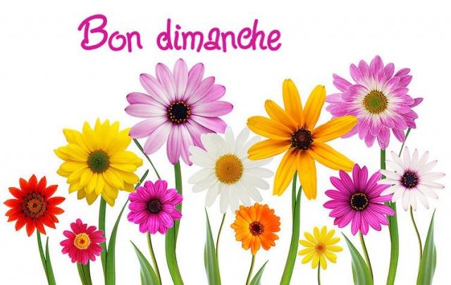 Le Thread du BONJOUR/BONSOIR  les Zanimo's  - Page 32 363550image549