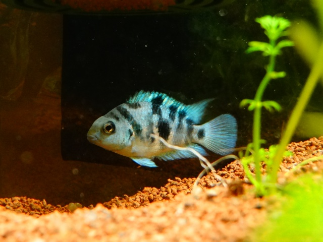 Ma Fish'étagère et les autres  - Page 6 364051DSC07086
