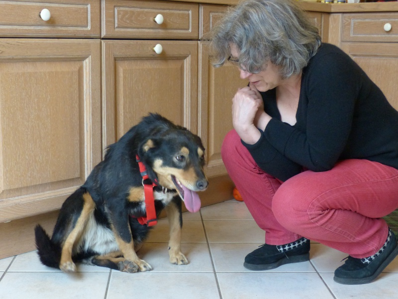 Negrutza, un amour de chienne, 2 ans environ - Page 2 365309P1030234