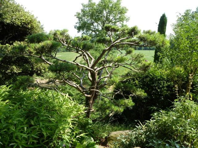 (26) Jardin Zen d'Erik Borja - Beaumont Monteux 366192P1020237