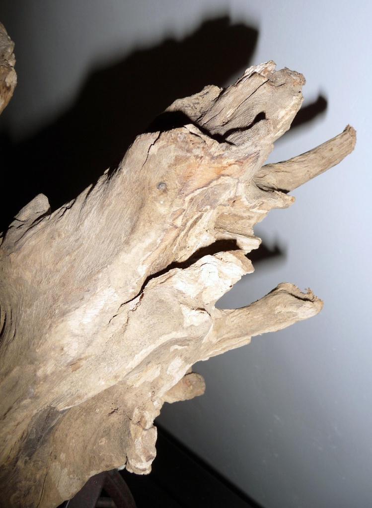 Aide traitement racine arbre 'platane) 366526P1080695