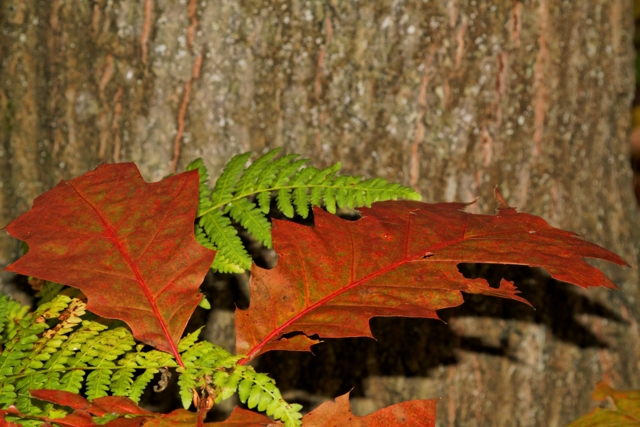 Les couleurs de l'automne 369350IMG_7545_DxO__640x480_