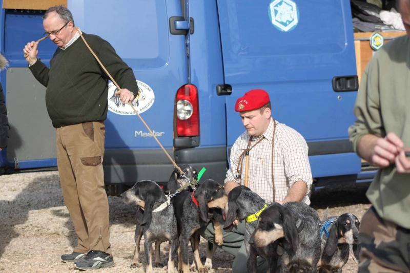 Brevet de chasse sur lièvre Marnay (71) 7 et 8 mars 2015 381107IMG6595