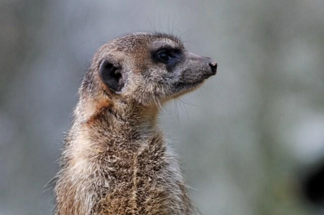 Zoo du Pal (Allier: Dompierre sur Besbre) 384141IMG_5909_DxO__640x480_
