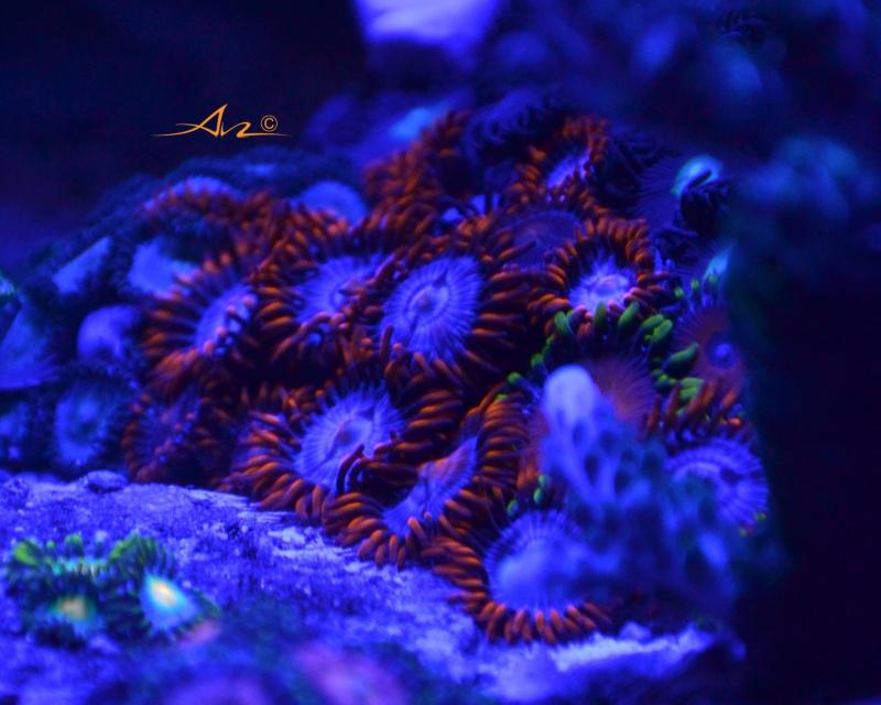 Mon premier aquarium eau de mer - Page 4 389444Zozofireandice