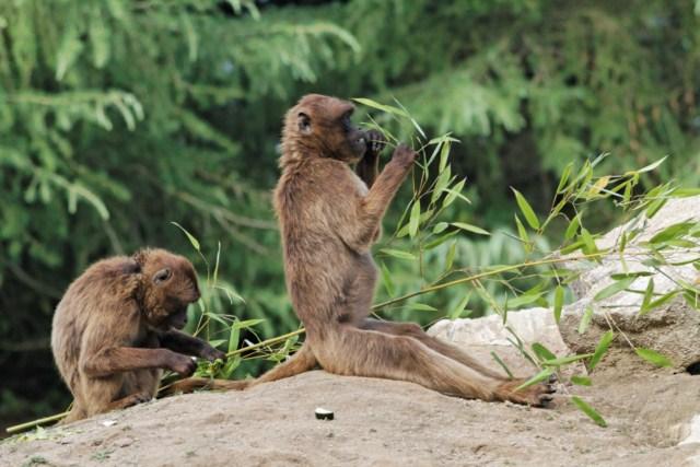 Zoo du Pal (Allier: Dompierre sur Besbre) 389615IMG_5859_DxO__640x480_