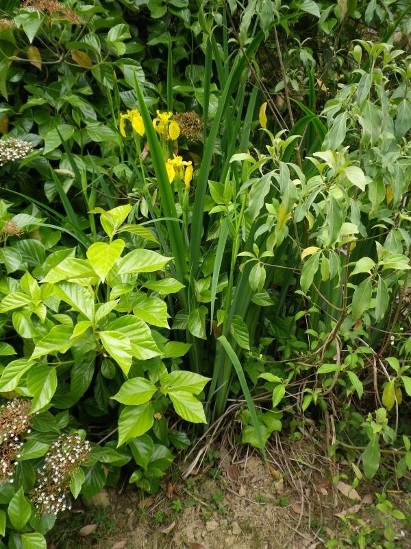 (40) Plantarium et chemin de ronde - Gaujacq - Page 2 389618IMGP4535