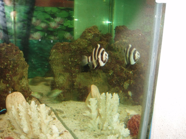 agressivité des poissons 390241PB300027