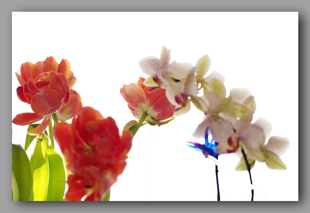 essais de High-Key avec fleurs 390318highkeyfleursD30060mmsansflash