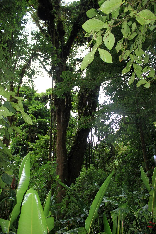 15 jours dans la jungle du Costa Rica - Page 2 390825santa3