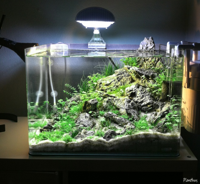 "Scaper's tank 50 L ""MountainScape"" - Page 2 391843top22"