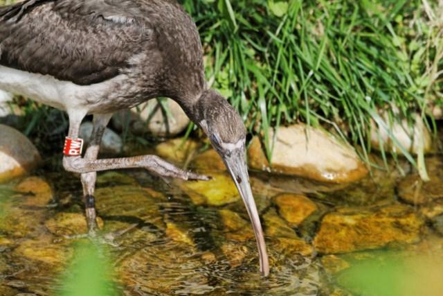 Zoo du Pal (Allier: Dompierre sur Besbre) 392872IMG_5941_DxO__640x480_