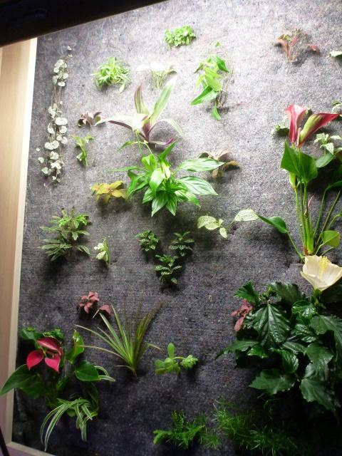 Le nouveau mur végétal de Olivetzou (projet fini à 98%) enfin les leds - Page 2 393399P1010090