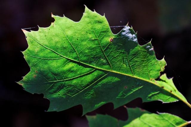 Les couleurs de l'automne 399472IMG_7617_DxO__640x480_