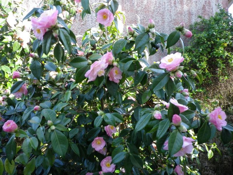 Quelques floraisons - Page 4 402121IMGP8387