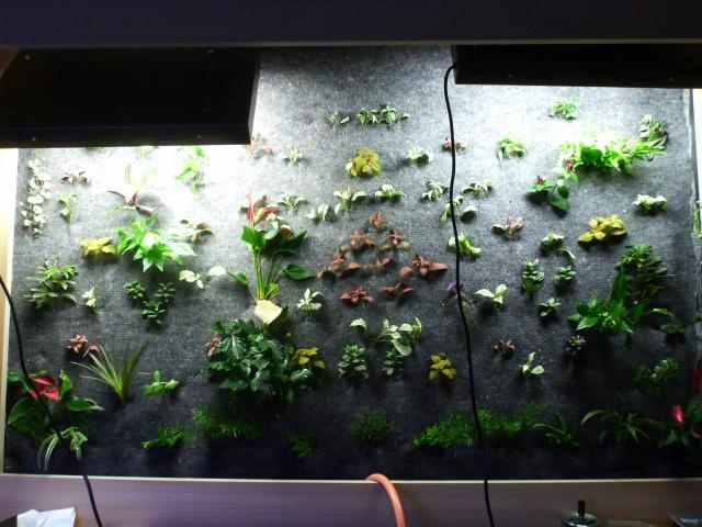 Le nouveau mur végétal de Olivetzou (projet fini à 98%) enfin les leds - Page 2 403935P1010086