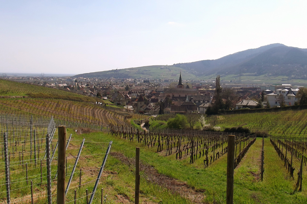 Les oranges outans fêtent le printemps en Alsace - 21 mai 2016 - Page 3 406390DSCF6978