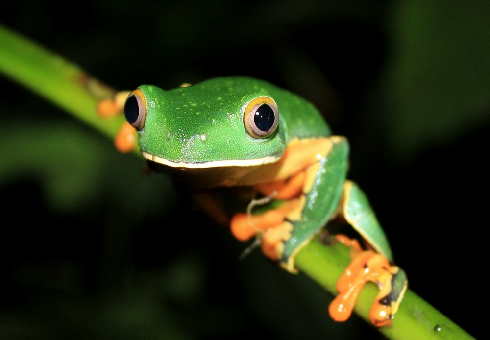 15 jours dans la jungle du Costa Rica - Page 2 406724calca4r