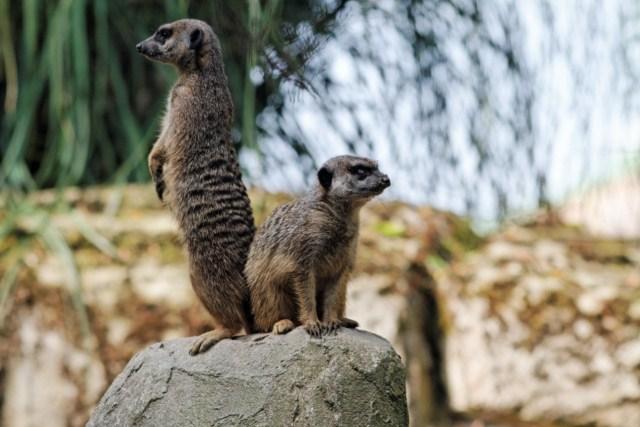 Zoo du Pal (Allier: Dompierre sur Besbre) 408225IMG_5904_DxO__640x480_