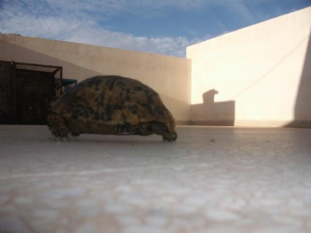 nouvelle tortue ! 411710DSCF1309