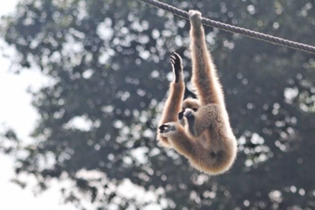 Zoo du Pal (Allier: Dompierre sur Besbre) 413964IMG_5867_DxO__640x480_