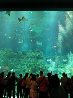 Trip Report - Hong Kong Disneyland HKD Chine Macau Hong Kong Ocean Park - Aout Septembre 2013 419249IMG3201