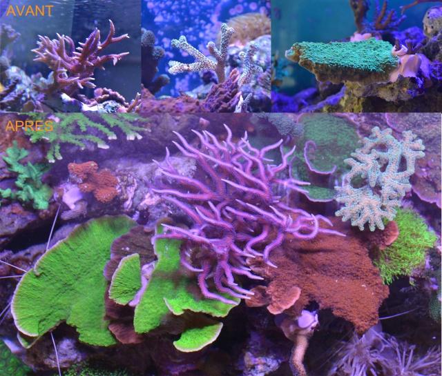 Mon premier aquarium eau de mer - Page 4 420211avantapres