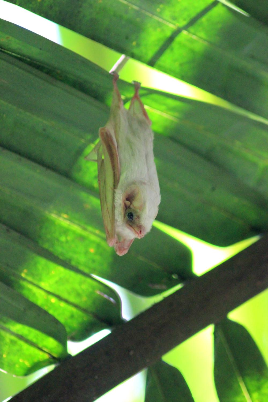 15 jours dans la jungle du Costa Rica 424870bat1r