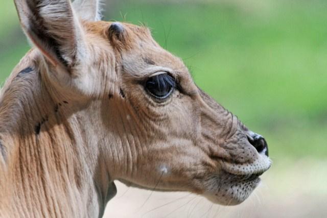 Zoo du Pal (Allier: Dompierre sur Besbre) 426378IMG_6353_DxO__640x480_