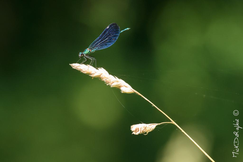 Insectes et Proxi. [Fil Ouvert] 427092T5600x372800188